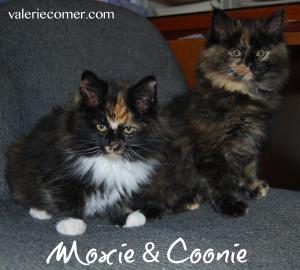 Moxie-Coonie