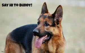 german-shepherd-free-for-your-computer-73461