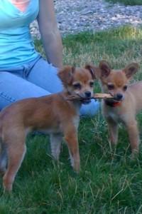 Bella&LaceyPups