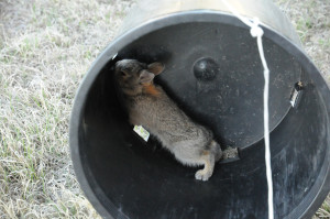 bunny-in-bucket