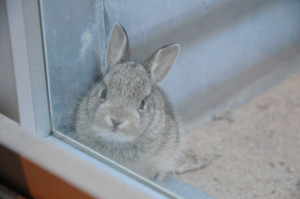 bunny-in-window-well
